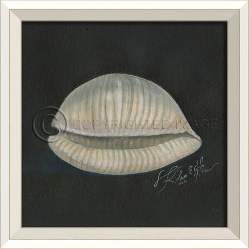 White Cottage Seashell No. 2 Framed Art