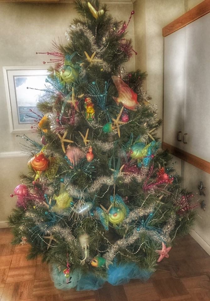 Coastal Christmas Trees Caron S Beach House