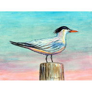 Royal Tern Placemats - Set of 4