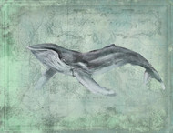 Humpback Whale by Anthony Morrow
