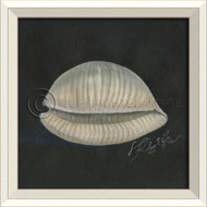 White Cottage Seashell No. 2 Framed Art