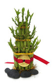 Lucky Bamboo 2 Tier