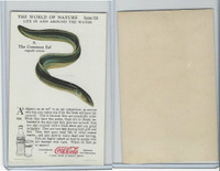 F213-3 Coca Cola, Nature Study, Water Life, 1920's, #8 Common Eel