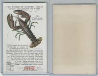 F213-3 Coca Cola, Nature Study, Water Life, 1920's, #12 Lobster