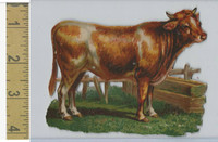 Victorian Diecuts, 1890's, Animals, Cow By Fence (3)