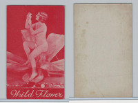 W Card IMR Co., Pinup Mutoscpope, 1930's, Wild Flower