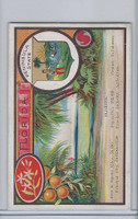 W Card, 1920's, States of the USA, Florida