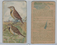 V75 Patterson Candy, Bird Cards, 1924, Meadow Lark