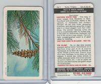 FC34-12 Brook Bond, Trees North America, 1968, #1 Eastern White Pine