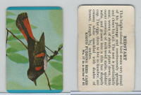 F218-2 Kosto Pudding, Bird Cards, 1964, #17 Redstart