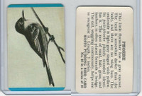 F218-2 Kosto Pudding, Bird Cards, 1964, #38 Phoebe