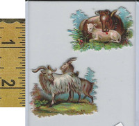 Victorian Card, 1890's, Animals Diecut, Goat, Cows (A8)