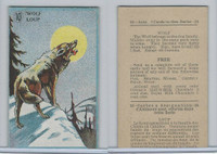 V2 Cowan, Animal Cards, 1920's, (Trimmed) #10 Wolf