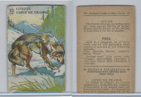 V2 Cowan, Animal Cards, 1920's, (Trimmed) #19 Coyote