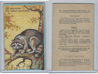 V2 Cowan, Animal Cards, 1920's, (Trimmed) #22 Racoon