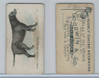 N163 Goodwin, Dogs of World, 1890, Curley Coated Retriever