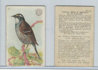 J5, Church & Dwight, Useful Birds America 1st Ser., 1915, #24 White-t Sparrow