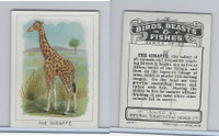 C1 Imperial Tobacco, Birds, Beasts, & Fishes, 1923, #15 Giraffe