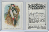 C1 Imperial Tobacco, Birds, Beasts, & Fishes, 1923, #16 Great S. Woodpecker