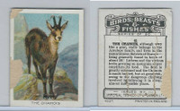 C1 Imperial Tobacco, Birds, Beasts, & Fishes, 1923, #41 Chamois