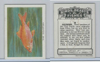 C1 Imperial Tobacco, Birds, Beasts, & Fishes, 1923, #42 Goldfish