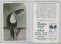 F333 Jewel, Animal Of The Week, 1956, White Throated Toucan