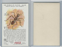 F213-3 Coca Cola, Nature Study, Insects, 1920's, #8 Ant