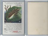 F213-3 Coca Cola, Nature Study, Insects, 1920's, #12 Firefly