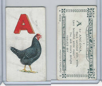 C28 Imperial Tobacco, Poultry Alphabet, 1924, #1 A For Ancona Chicken