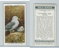 P72-142 Player, Wild Birds, 1932, #19 Kittiwake and Young