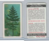 FC34-12 Brook Bond, Trees North America, 1968, #2 Eastern White Pine
