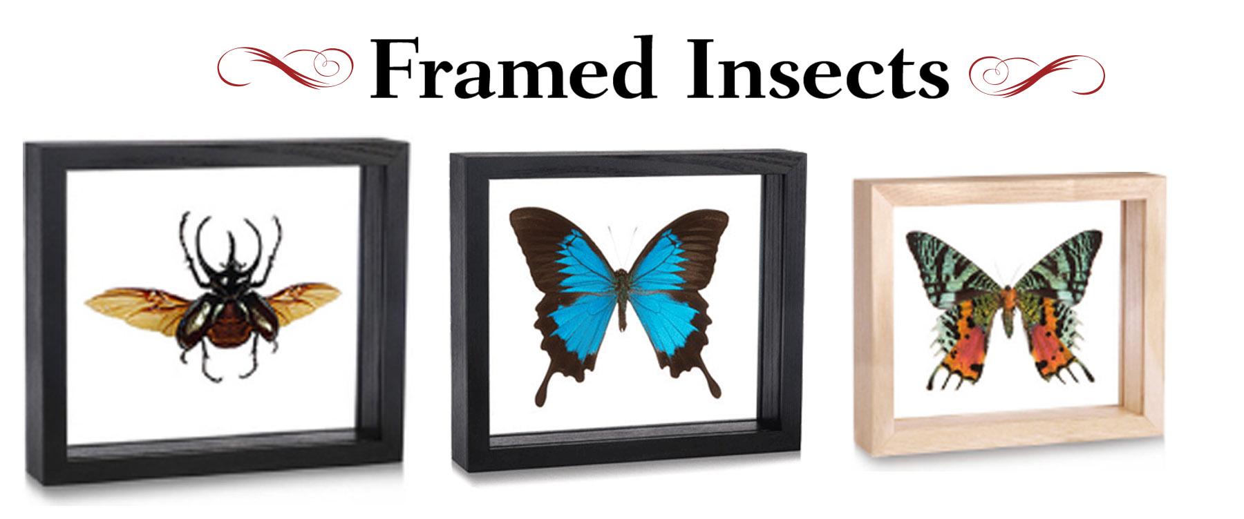 insectbanner.jpg
