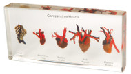 Comparative Hearts in Resin