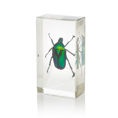 chafer beetle in resin small