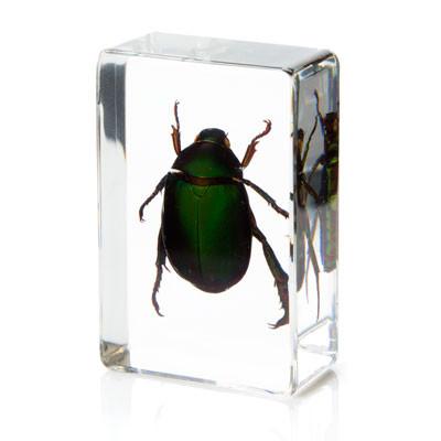Flower Beetle in Resin