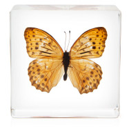 Butterfly in Resin - Greater Fritillary