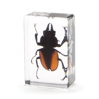 Stag Beetle in Resin