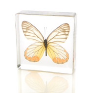 Butterfly in Resin - Painted Jezebel