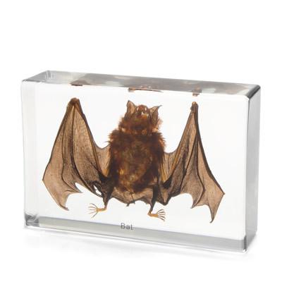 Bat Specimen in Resin