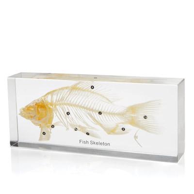 Fish Skeleton In Resin The Evolution Store