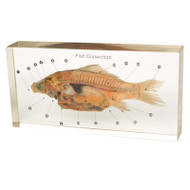 Fish Dissection in Resin