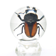 Insect Globe, small stag beetle