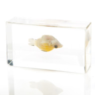 Sailfin Molly Fish in Resin