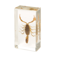 Chinese Golden Scorpion in Resin Large