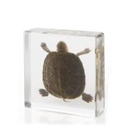 Pond Turtle Large