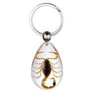 Scorpion Clear Small Key Chain
