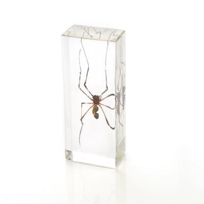 Garden Spider Large