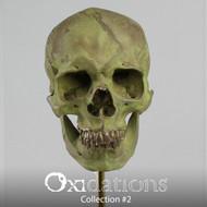 Oxidations Skull #2