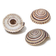 Sundial - Seashell