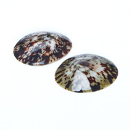 Oval Limpet - Seashell